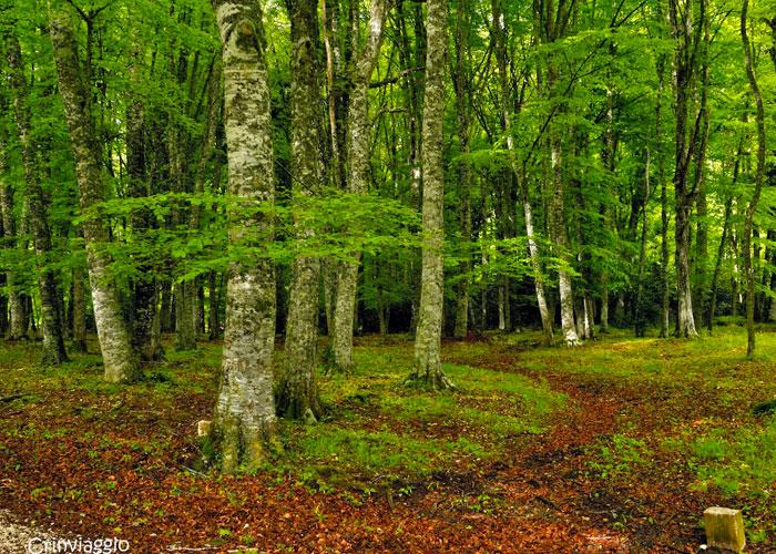 foresta_3